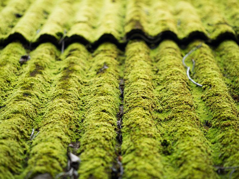 Démoussage et traitement anti-mousse de toiture dans le Var (83)
