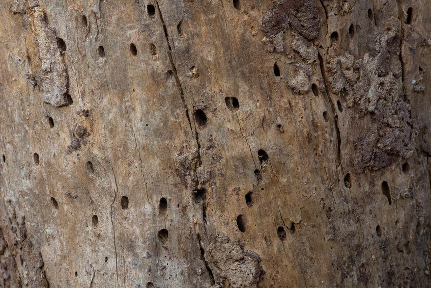 Traitement charpente dans le Var - Couvreur RCP Habitat