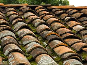 Mousses et lichens sur toiture
